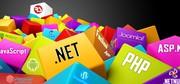 Web Development,  Web Designing,  SEO,  Web Application Development